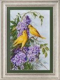 Birds and lilac