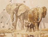 African Elephants & Namaqua Doves