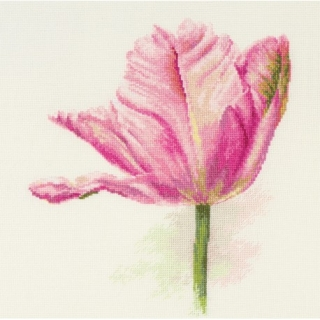 Tulips. Light pink